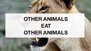 animals-eat-other-animals