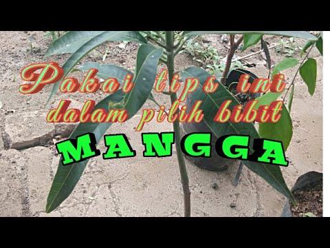 Menganjing Abang Jual Mangga Asam from YouTube · Duration:  1 minutes 9 seconds
