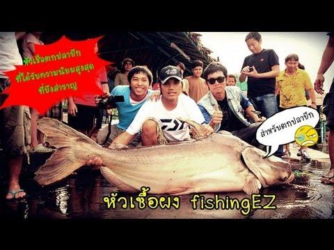 หัวเชื้อตกปลาบึก กินทุกเม็ด อัดจนเบื่อ by fishingEZ