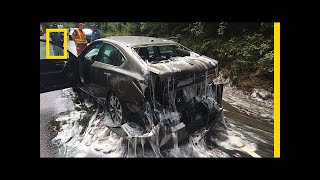 Watch  'Slime Eels' Explode on Highway After Bizarre Traffic Accident | National Geographic