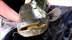 Pêche de la carpe sur le Cher indre et loire