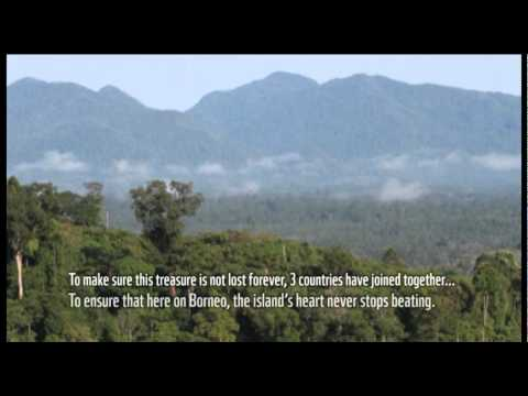 The Heart of Borneo Song