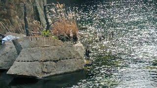 アートブリッジ  北木島  岩本象一 小谷野哲郎