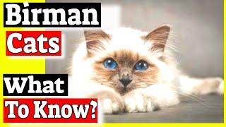 Birman Cats¿Son amigables los gatos Birman?Preguntas y respuestas