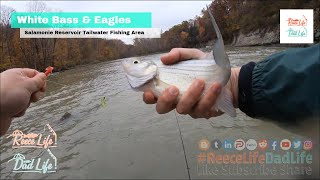 Fall Salamonie River Tailwater Fishing Adventure Plus Bald Eagles and Hiking to see Fall Colors