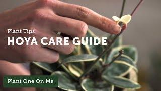 Hoya Care & Propagation — Ep 112