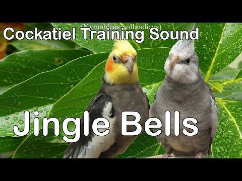 Jingle Bells – Whistle Cockatiel Training sound