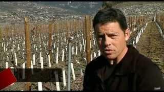 Taille de la vigne: méthode italienne pour vignerons valaisans