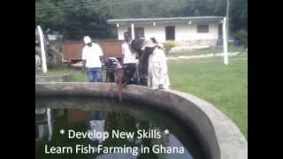 Tilapia Fish Farming | Fish Farming in Ghana West Africa + Fish Farm Training - Volta Lake
