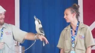 Laughing Kookaburra Santa's Village Azoosment Park 7-26-16