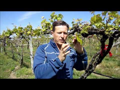 Vineyard Video 4/18/2012