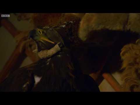 Eğitilmiş KARTAL Acımasızca Tilkiyi Öldürdü.