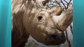 Животные которых мы больше не увидим. Вымершие животные.