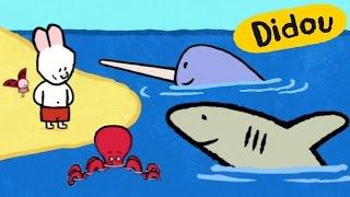 Didou dessine-moi un Requin, un Narval et une Pieuvre | Dessins animés pour les enfants