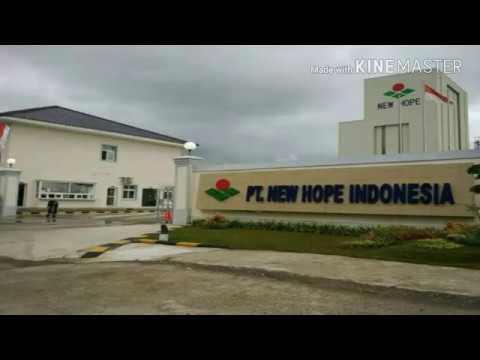 Lowongan kerja di PT. New Hope Indonesia Branch Makassar