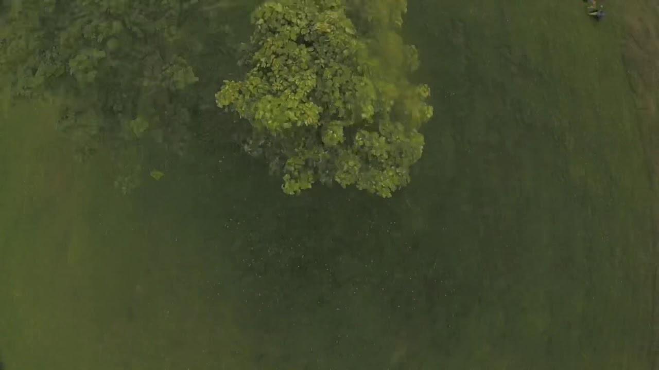 Treesome Video