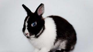 #3656. Кролики и зайцы (В мире животных)