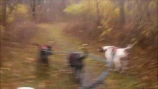 Kickbike Dog Mushing  FALL 20 18