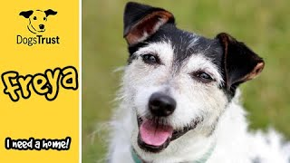 Meet Freya! | Dogs Trust Shoreham