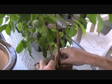 a simple way to root plants from cuttings html 3