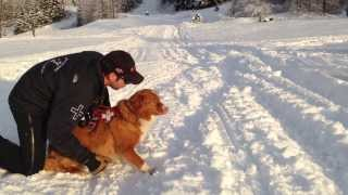 Alyeska Avalanche Dog Training (puppies Included)