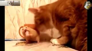 Приколы с животными - забавные хомяки | new crazy animals 47