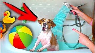 ВАННА РАЗВЛЕЧЕНИЙ ДЛЯ СОБАКИ Аквапарк КАК ПОМЫТЬ СОБАКУ | Elli Di Pets