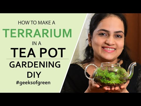 How To Make A Terrarium In A Tea Pot| Gardening DIY