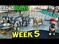 XL American Bully Puppies: 📢 Week 5 Update 🎈 (Feeding, Playtime, Showcase Music Video) 🎬 🃏