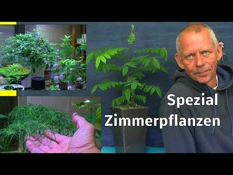 zimmerpflanzen-spezial-mit-detlef-römisch-im-reich-der-exoten-pflanzen-verstehen-und-erleben