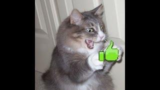 смешные прикольные  кошки фото