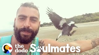 Baby Magpie Falls In Love With His Rescuer's Cat   The Dodo Soulmates