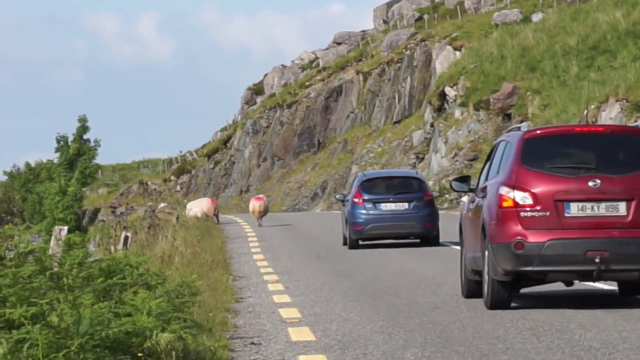 Driving Hazards in Ireland