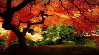 Feng Shui~ 4 ~ Relaxing Music ~ Buddism Music ~ Mind, Body and Soul ~Soothing Pictures