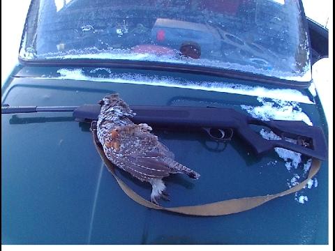 охота на рябчика на пищщик в феврале с пневматикой.