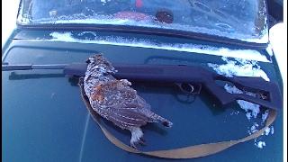 Охота на рябчика на пищщик в феврале с пневматикой