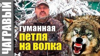ГУМАННАЯ ПЕТЛЯ на волка и других хищников