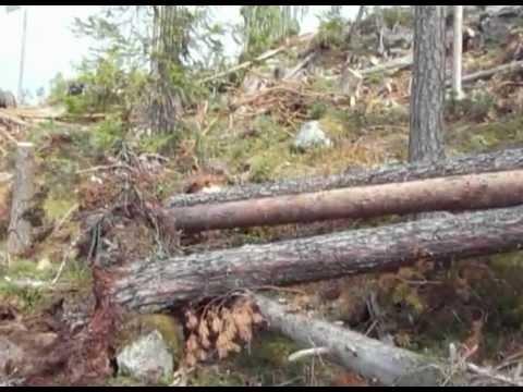 Timberjack skidder 360 winch sweden