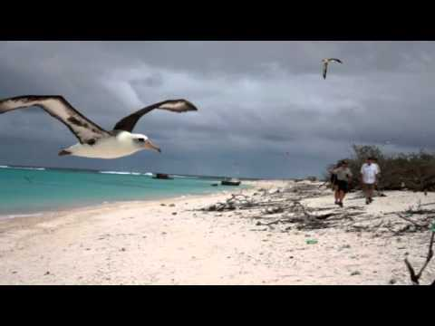 Midway Atoll.m4v