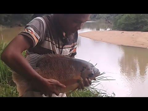 STRIKE!! Ikan Gurami Besar #1