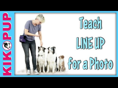 How to train line up for a photo! -  Multi dog tricks training by Kikopup