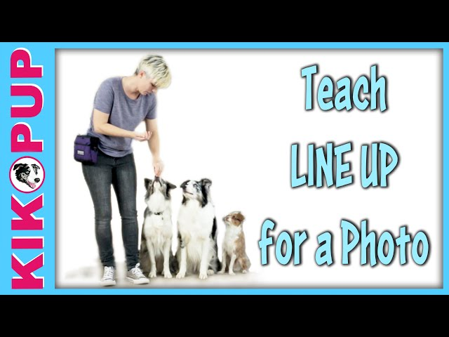 How to line up for a photo! -  Multi Dog Trick Training by Kikopup