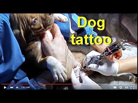 Стая бездомных собак загрызла хаски во Владивостоке