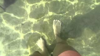 Экстрим в Египте. Рыбка - кусючка кусала за пальцы прямо на берегу ч.2(Вот такие приколы на пляже отеля CONCORDE EL SALAM FRONT/Sport AREA 5*, Египет, Шарм-эль-Шейх, справа от понтона, живёт агресс..., 2015-01-28T13:22:08.000Z)