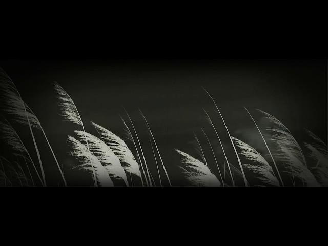 Hypnotic reed wind / Hipnotikus Nád Szél