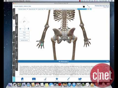 Body for visible 3d free atlas pc anatomy download