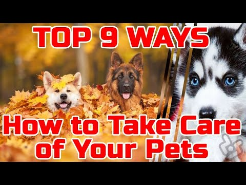 Top 9 Ways How To Take Care Of Your Pets Pet Care Basics Dogs