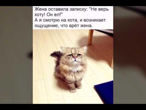 Картинка не верь коту его кормили когда