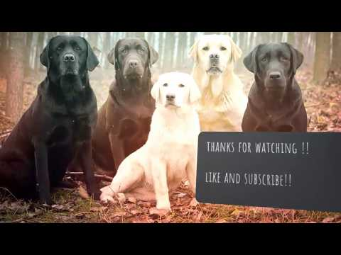 Top 5 Sniffer Dogs breeds in World | You For Animal