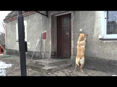 Te presentamos al perro más educado y persistente
